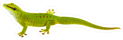 Realistic Green Gecko Looking Up Sticker