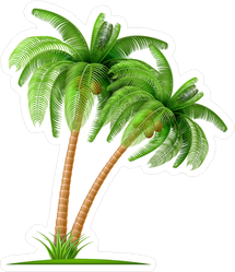 Realistic Palm Tree With Coconuts Sticker