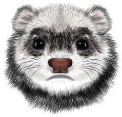 Realistic Portrait Of Sad Ferret Face Sticker
