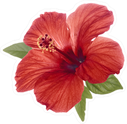 Realistic Red Hibiscus Flower With Green Leaves Sticker