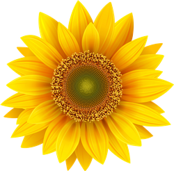 Realistic Sunflower Petals Sticker