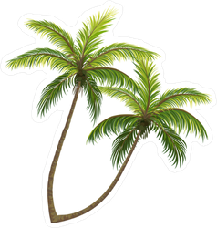 Realistic Vector Palm Trees Sticker