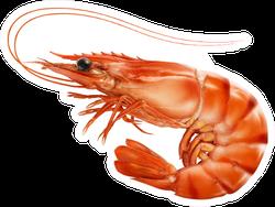 Red Cooked Prawn Or Tiger Shrimp Sticker
