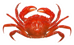 Red Crab Isolated On White Background Sticker