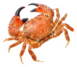 Red Crab Isolated Sticker
