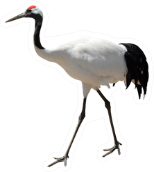 Red-crowned Crane Photo Realistic Sticker