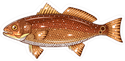 Red Drum Fish Sticker