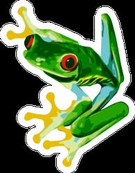 Red Eye Tree Frog Of Costa Rica Sticker