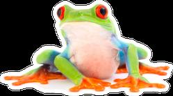 Red Eyed Monkey Tree Frog Cute Sticker