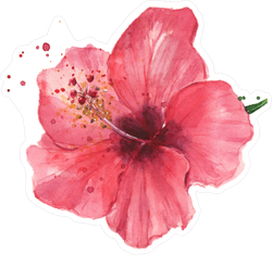 Red Hibiscus Flower Watercolor Sticker