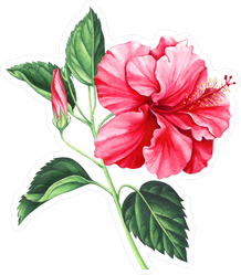 Red Hibiscus With Leaves And Bud Sticker