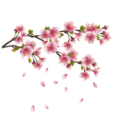 Sakura Blossom Pink Japanese Cherry Tree Sticker