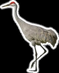 Sandhill Crane, Isolated On White Sticker