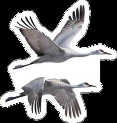 Sandhill Cranes Flying Isolated On White Sticker