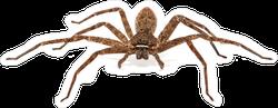 Scary Asian Wolf Spider Sticker