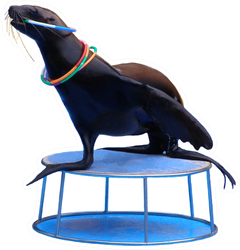 Sea Lion Playing With Rings On Stand Sticker