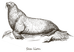 Sea Lion Sketch Isolated On White Background Sticker