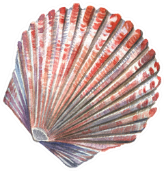 Sea Shell Painted Watercolor Sticker