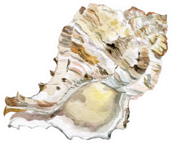 Sea Shells White Illustrations Sticker