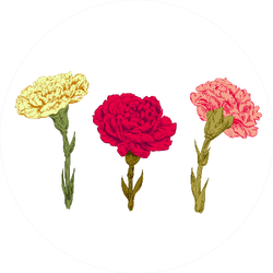 Set Of Carnation: Red, Pink, Yellow Flowers Sticker
