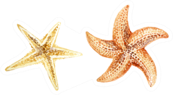 Set Of Hand Painted Watercolor Starfishes Sticker