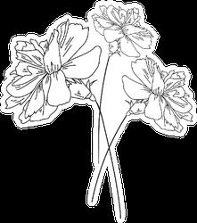 Set Of Three Carnation Flowers, Plant Botanical Art Sticker