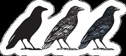 Set Of Three Hand-drawn Black Birds Isolated Crow Sticker