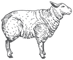 Sheep Abstract Domestic Animal Sketch Sticker