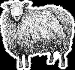 Sheep Sketch Style Sticker