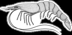Shrimp Polygonal Lines Illustration Sticker