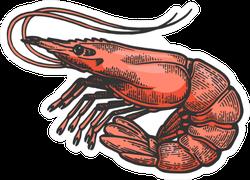 Shrimp Sea Caridea Animal Sketch Sticker