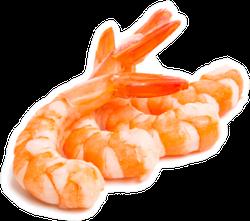 Shrimp Set Isolated On White Sticker