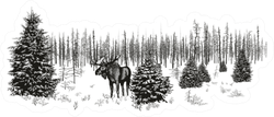 Siberian Moose In Winter Forest Sticker