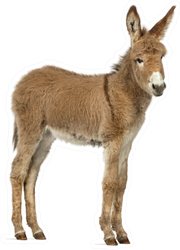 Side View Of A Young Provence Donkey Foal Sticker