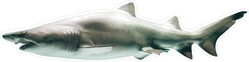Side View Of Great White Shark Sticker