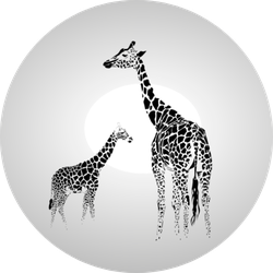 Silhouette Of  Giraffe With Her Baby Sticker