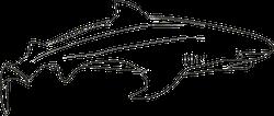 Simple Shark Outline Sticker
