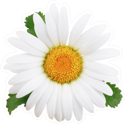 Single Daisy in Full Bloom Sticker
