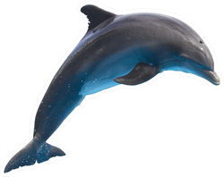 Single Jumping Bottlenose Dolphin Sticker