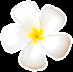 Single White Plumeria Flower Sticker