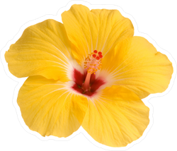 Single Yellow Hibiscus Photo Sticker