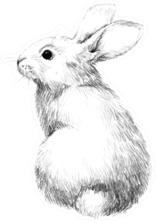 Sketch Of A Rabbit Small Furry Pet, Pencil Sketch Sticker