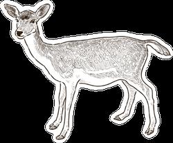 Sketch Of A Young Deer Sticker