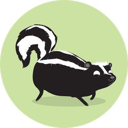 Skunk Illustration On Green Background Sticker
