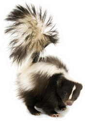 Skunk Isolated On A White Background Sticker