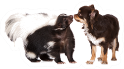 Skunk Meets A Chihuahua Dog Sticker