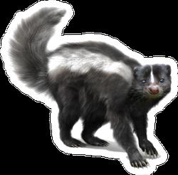 Skunk On A White Background Sticker