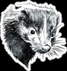Skunk Sketch Head Sticker