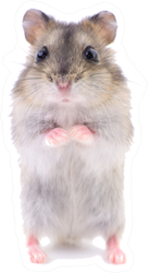 Small Domestic Hamster Isolated On White Sticker