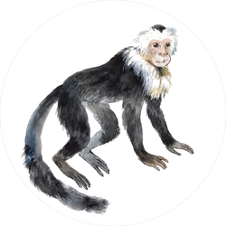 Smiling Capuchin Monkey Sticker